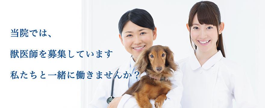 当院では、獣医師を募集しています私たちと一緒に働きませんか?